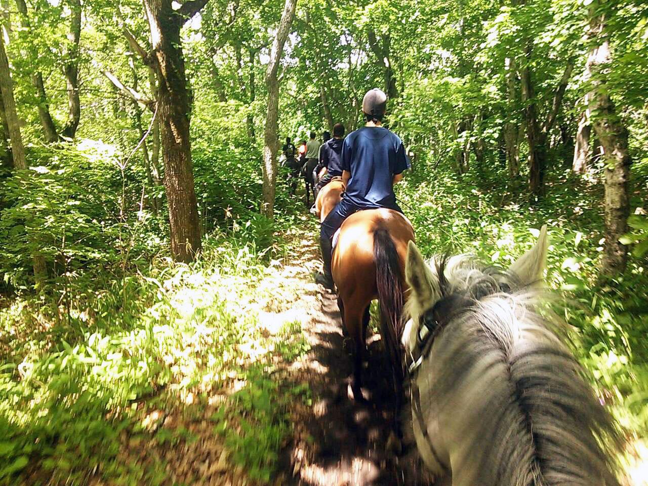 夏のトレッキング(馬からの眺め)