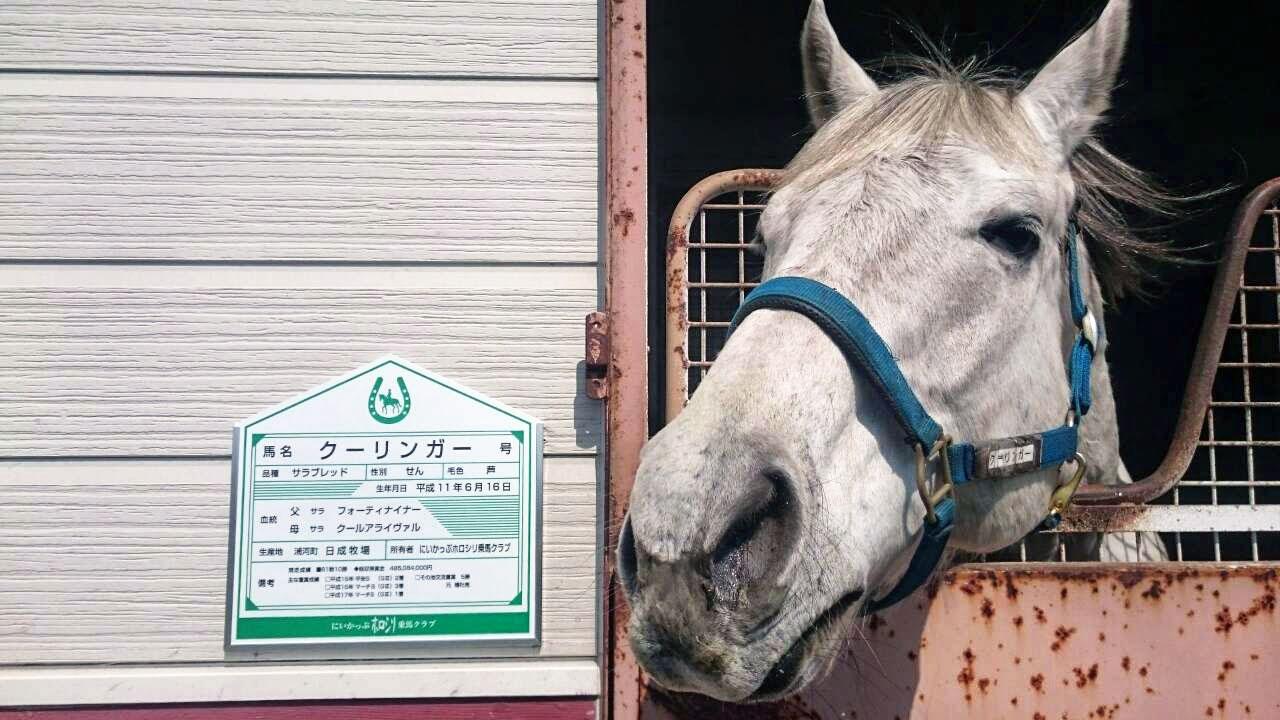 馬の名前看板
