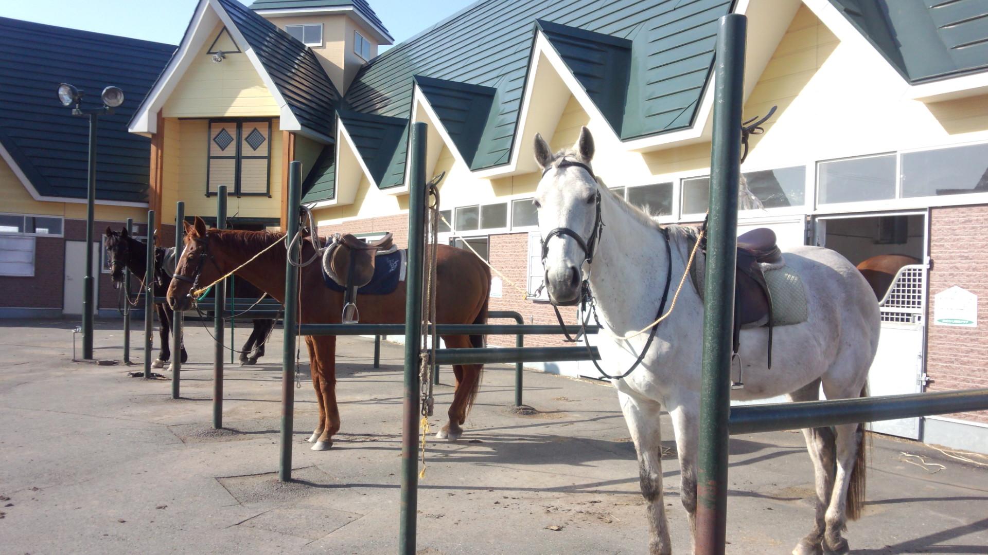 厩舎と馬繋ぎ場