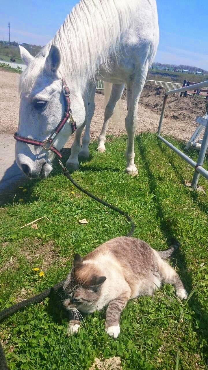 芦毛のお馬さんと猫のきゅうちゃん