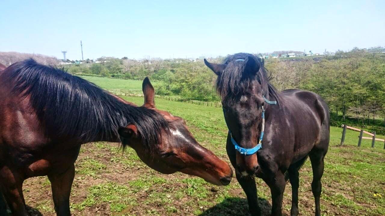馬のご挨拶