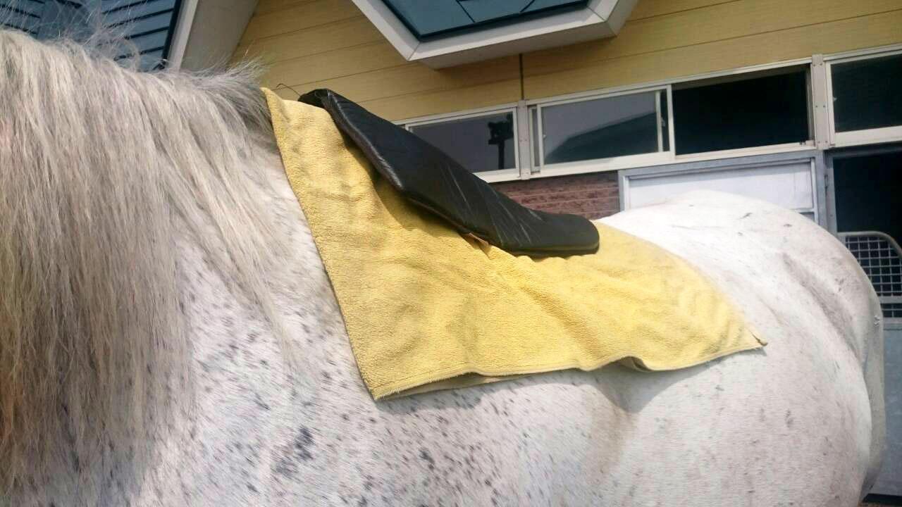 コア号の馬装-2