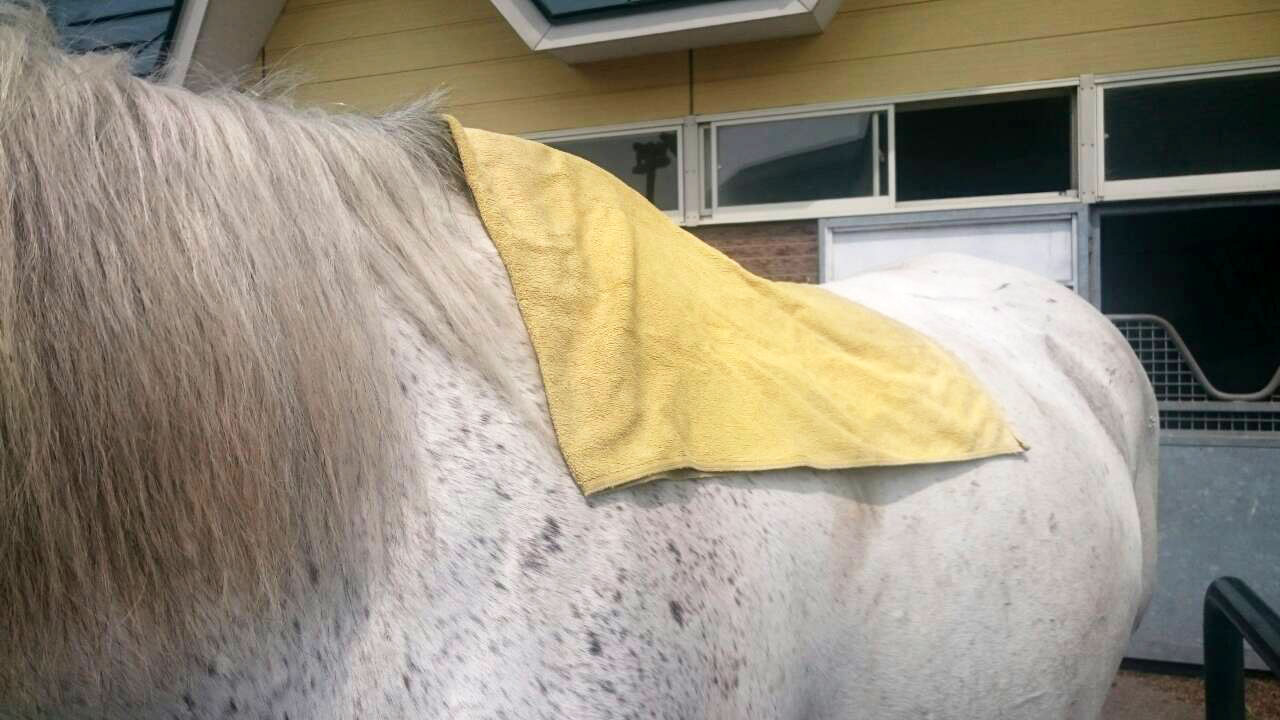 コア号の馬装-1