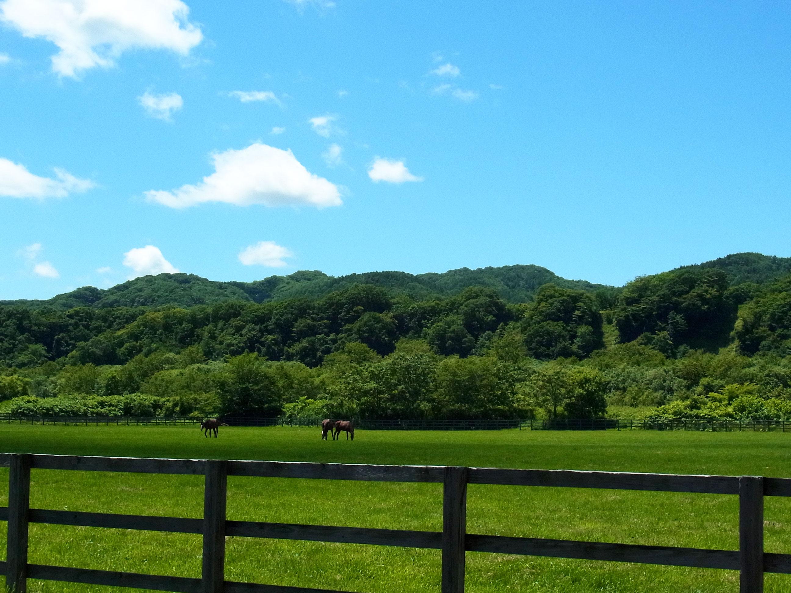 新冠の牧場風景