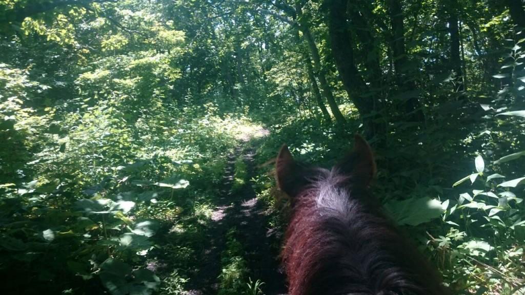 馬から見たトレッキングの森
