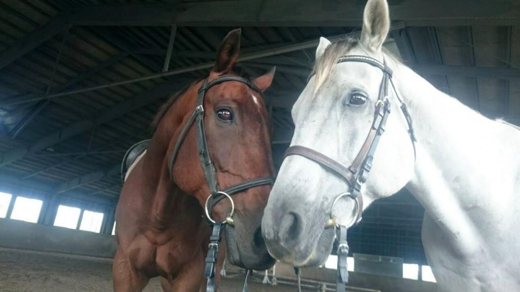 仲良しな馬たち