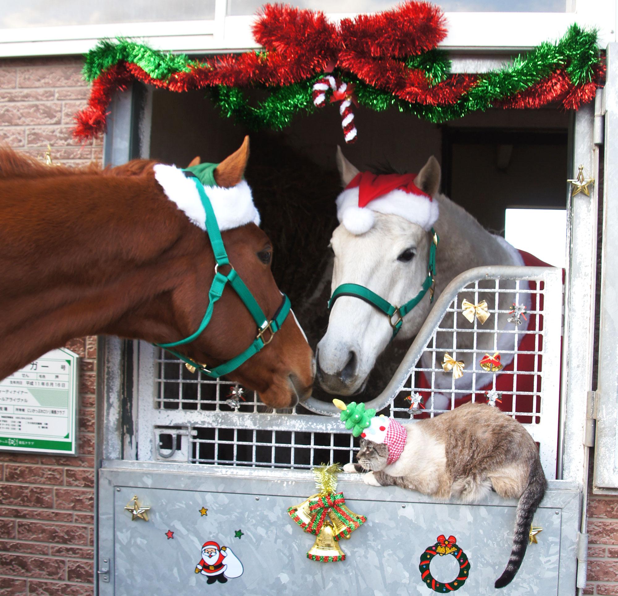 馬サンタと猫ツリー
