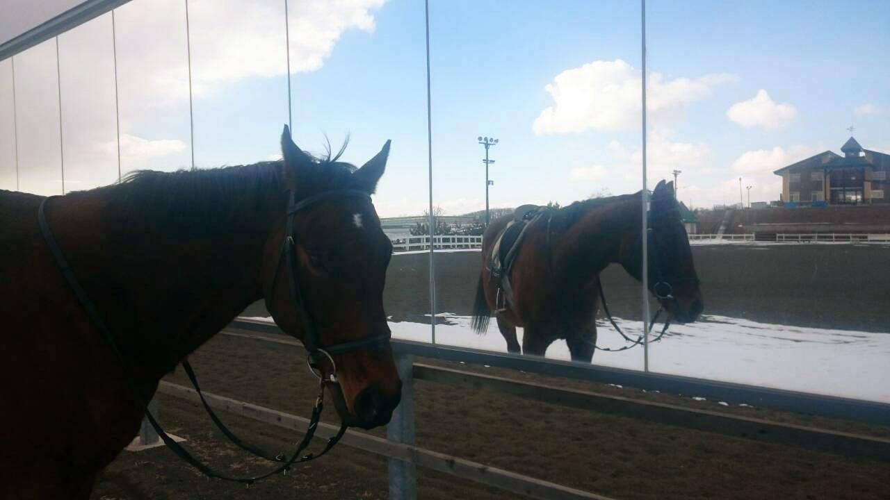 外馬場の鏡とお馬さん