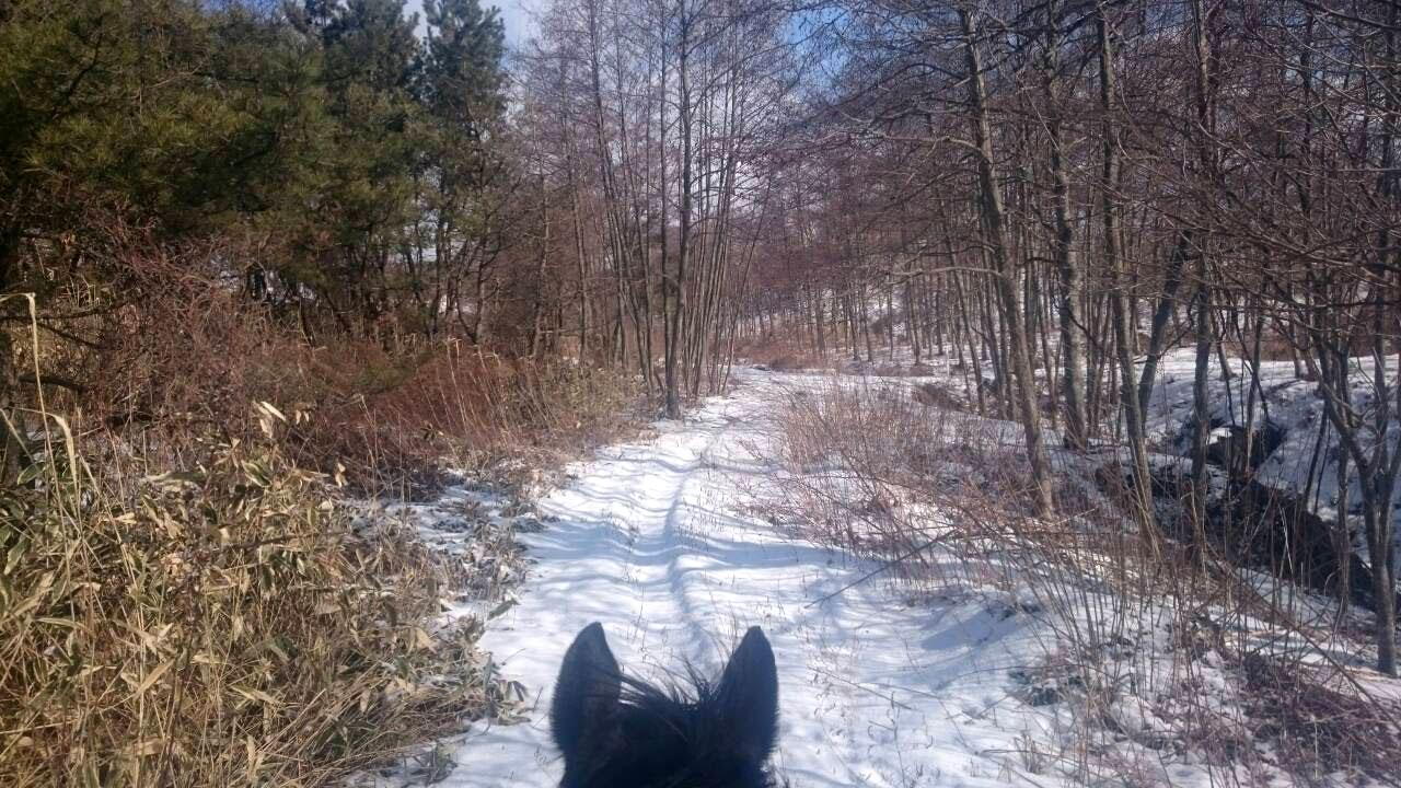 雪の日トレッキング2016年2月