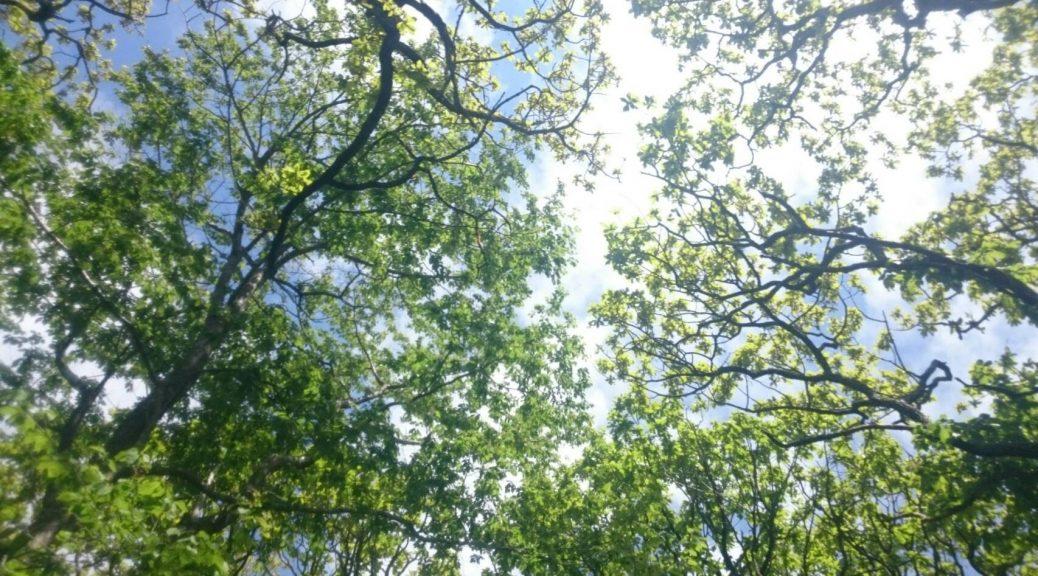 トレッキングの森