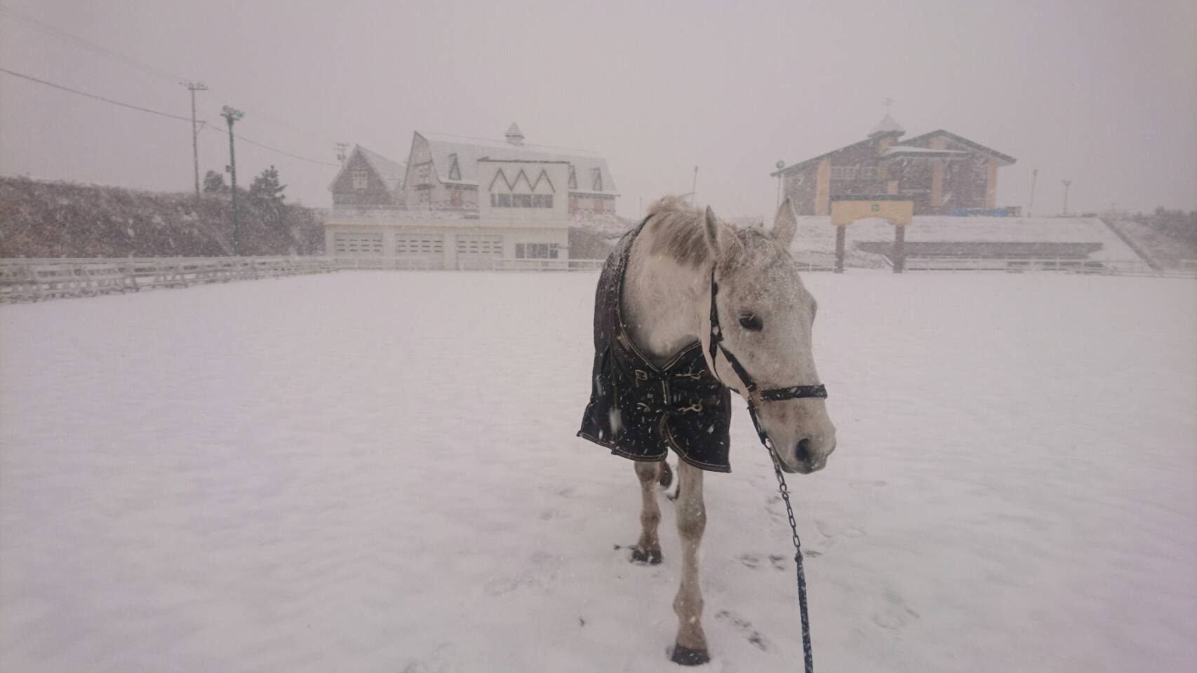 2016年12月降雪中の様子