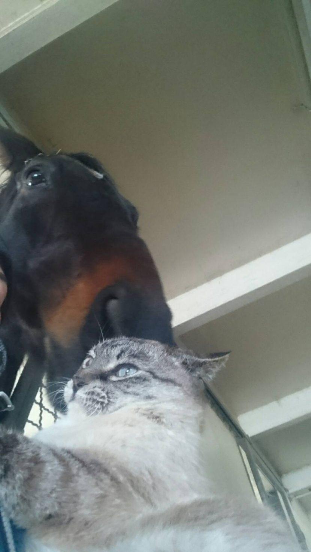 きゅうちゃんとお馬さん