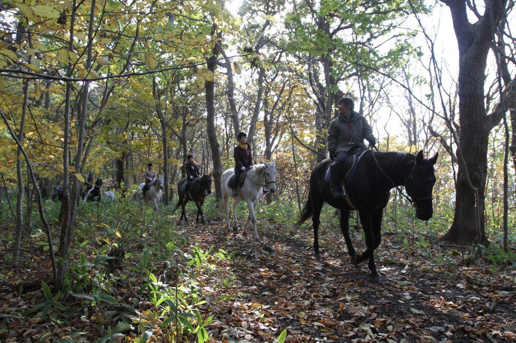 秋のトレッキングの森