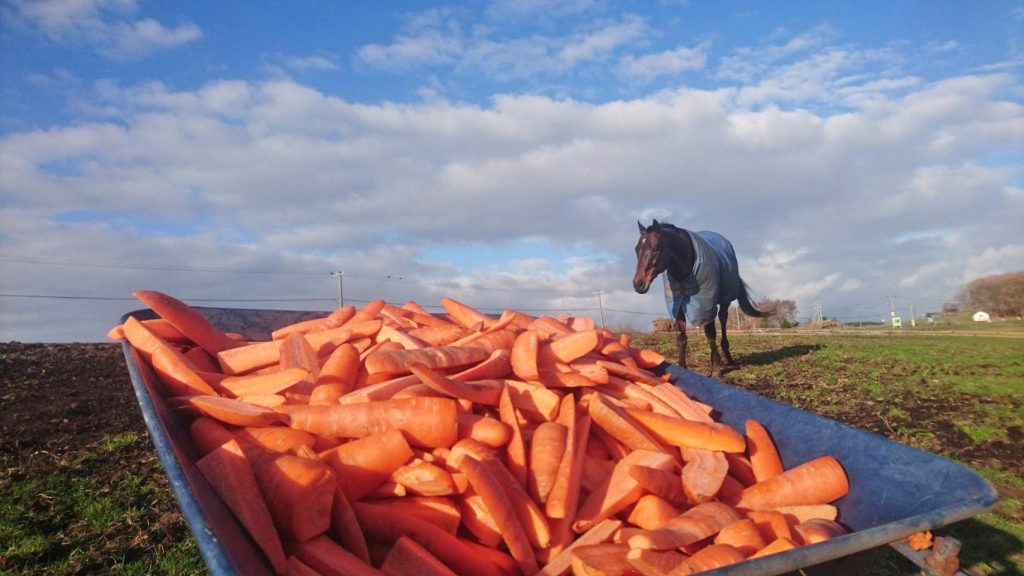 山盛り人参とお馬さん