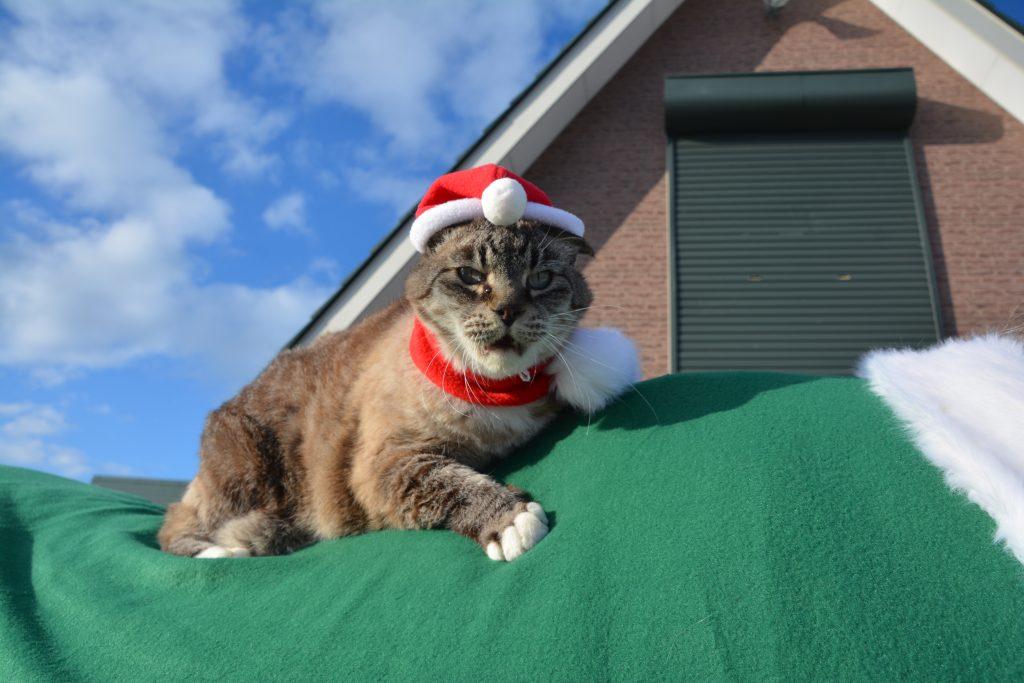 クリスマス猫写真