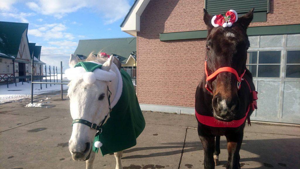 クリスマス馬写真