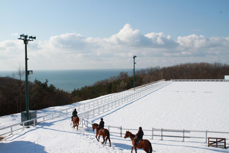 冬乗馬クラブハウスからトレッキングコースの眺め