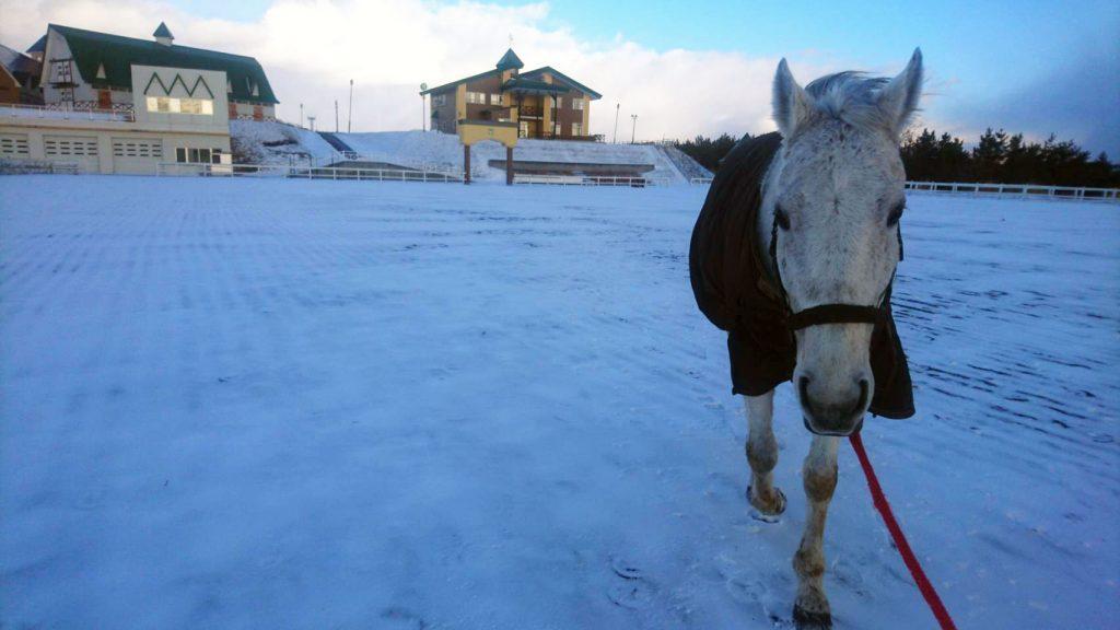 放牧地に向かう馬(冬)