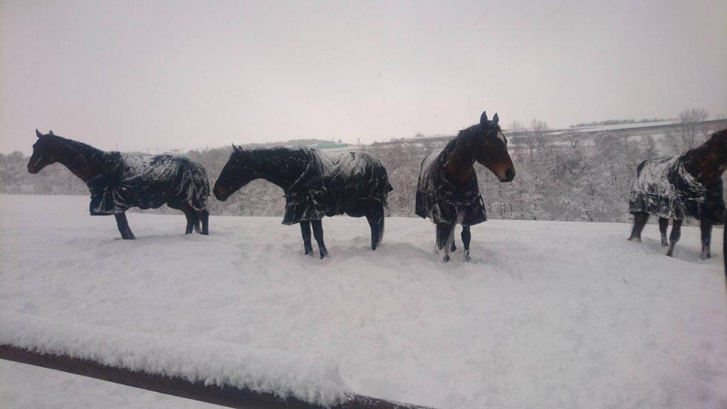 雪がたくさん降った日の放牧地 その2