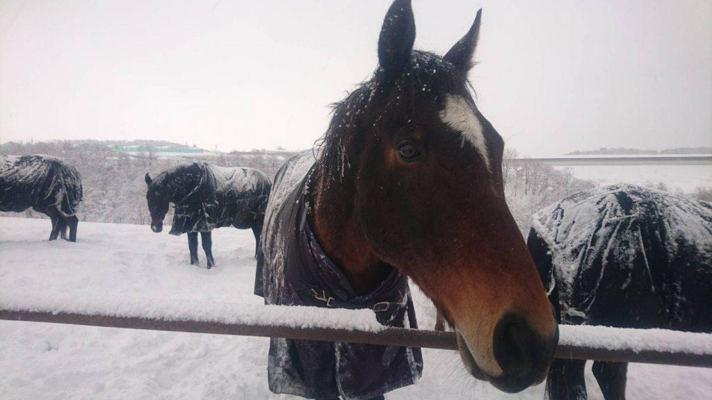 雪がたくさん降った日の放牧地