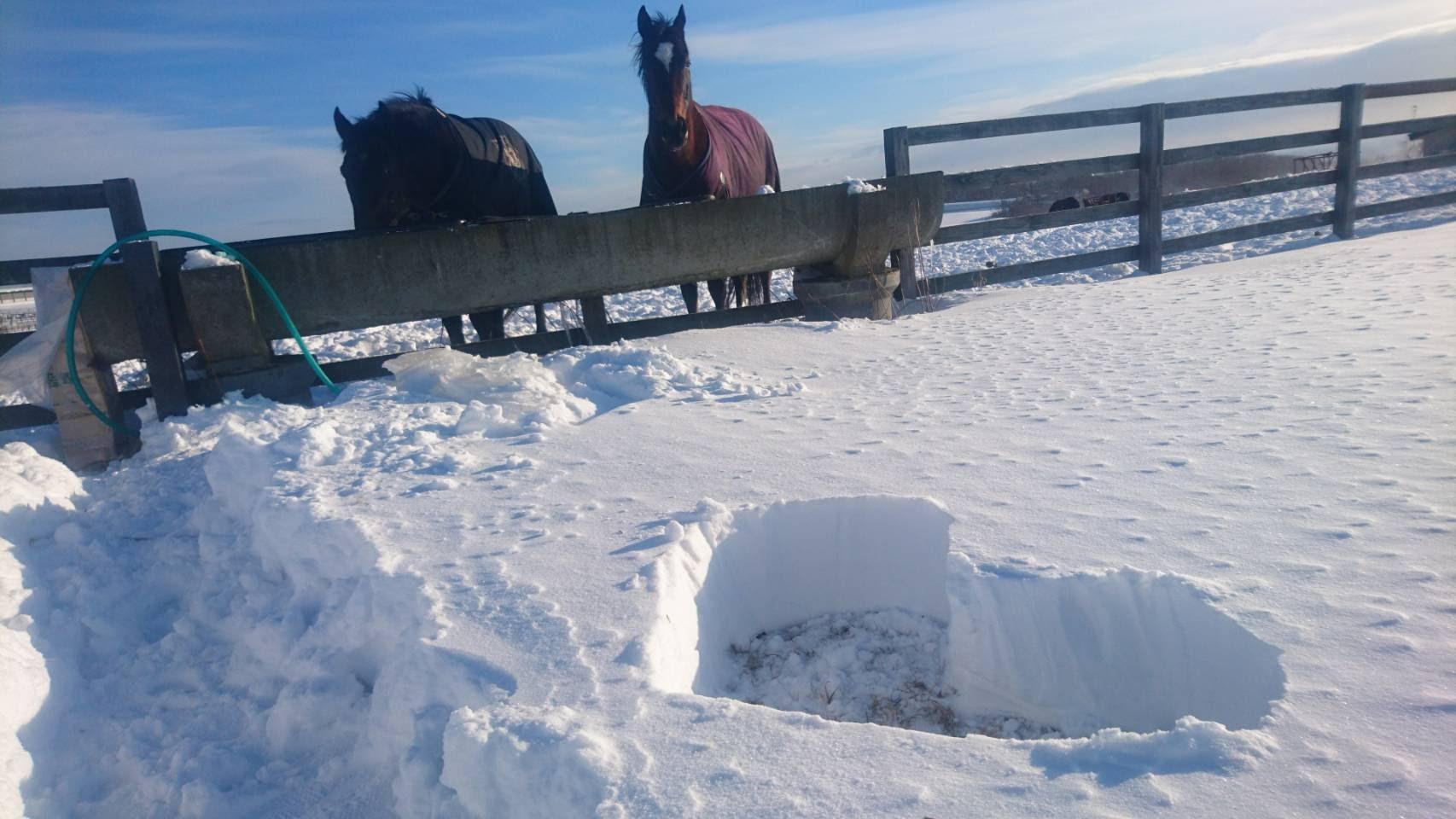 ハート形にくり抜いた雪と馬