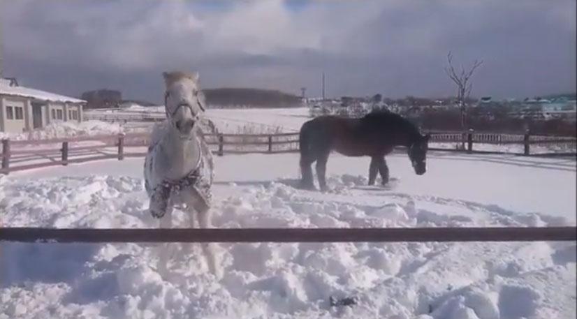 雪まみれのお馬さん